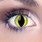 Yellow cat eyes  (1)